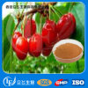100% Natural Vitamin C Acerola Cherry Extract (LY-0135)