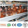 Battery Cages with Automatic Nipple Drinker System