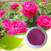 Rose Flower Extract Powder (4: 1, 10: 1, 20: 1)