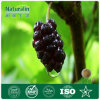 100% Natural Mulberry Fruit Extract, Plan Extract Nat-133