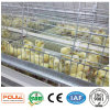New a Frame Pullet Cage System