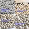 Food Grade Japan Type White Kidney Bean