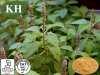 Nutraceuticals Raw Material Forskolin 10%, 20% Coleus Forskohlii Extract