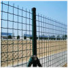 PVC Coated Welded Euro Fence 50X75mm