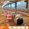 Automatic Broiler Poultry Feeders and Drinkers for Modern Chicken Farm From Factory