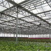 Hot Sale Multi-Span PC Sheet Greenhouse for Sale
