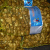 New Crop Chinese Freshthin Ginger 150g and up