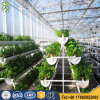 Professional Hydroponics Vegetables Glass Greenhouse