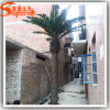 Best Sale Artificial Date Palm Tree for Outdoor Decoration