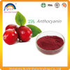 Cranberry Juice Powder with Proanthocyanidin
