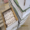 China Top Quality Pure White Garlic