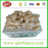 Fresh Chinese Yellow Ginger with Good Price