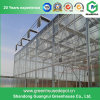 Multi-Span Steel Frame/ Aluminum Profile Polycarbonate Sheet Greenhouse