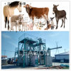 Farm Use 3t/H Milk Cattle Feed Pellet Production Plant