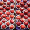 Fresh Red Apple 2014 New Crop