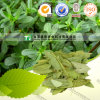 Natural Herb Medicine Folium Fan Xie Ye Sennae
