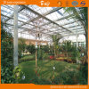 Good Appearance Long Life Span Glass Multi-Span Greenhouse