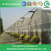 Vegetables/Fruit/Garden/Flowers/Farm Multi Span Plastic Greenhouses
