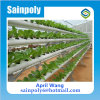 Low Cost Plastic Film Greenhouse Hydroponics for Sale