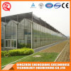 Multi Span Galvanized Steel Frame Glass Greenhouse