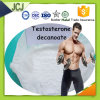 Testosterone Decanoate Deca Anabolic Raw Steroid Hormone for Muscle Growth