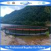 Fish Cage 2013-017