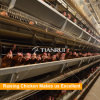 Poultry Farming Equipment Chicken Cage for close farming house Automatic design