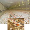 Full Set Automatic Poultry Farm Machinery for Broiler