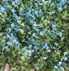 Artificial Blue Landscape Leaves Hedge for Garden (MZ188003F)