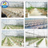 Dutch Bucket Drip Irrigation System for Large Scale Growing
