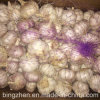 New Crop Fresh Chinese Pure White Garlic (5.0cm, 5.5cm, 6.0cm)