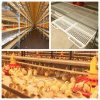 Automatic Chicken Cage for Broiler Production
