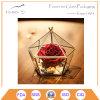 Artistic Clear Glass Jewel-Boxed Glass Geometric Terrarium
