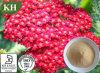 100% Natural 10: 1. Achillea Millefolium Extract