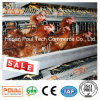 Hot Selling a Type Automatic Battery Layer Poultry Cage Equipment