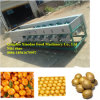 Automatic Fruit and Vegetable Sorting and Grading Machine