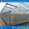 Light Deprivatsion Film Agricultural Greenhouse for Tomato