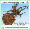 Health Ingredient Devil′s Claw Powder Extract with Harpagoside 1%-5% HPLC