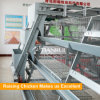 Full automatic H type Pullet Chicken Cage wholesale prices