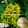 Hot Selling Golden Rod Extract 4%-10% Flavonoids