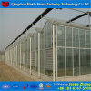 China Professional PC Sheet Greenhouse for Cucumber