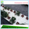 Insulated Tempered Glass Greenhouse