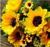 7 Good Quality and Beautiful Fork Holland Sunflowers