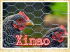 40*40mm*0.8mm Hexagonal Wire Netting for Farm Fence