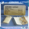 Absorbable Suture Chromic Catgut