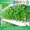 Green Houses Nft Hydroponic System