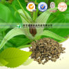 Manufacturer Supply Dried Herbal Plant Radix Stemonae
