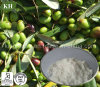 Pure Natural Glossy Privet Extract Oleanolic Acid 98% by HPLC,