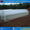 Single Span Plastic Film Tunnel Greenhouse for Vegetables/Tomatoes/Cucuber/Pepper