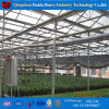Factory Supply Hydroponic Systems Glass Greenhouse for Tomato